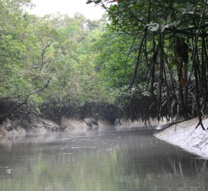 "Sundarban<br><span class=""cc-link""><a href=""http://www.flickr.com/photos/chingfang/297358990/"" target=""_blank"">Autor:Frances Voon</a><a href='http://creativecommons.org/licences/by/3.0'> <img class=""cc-icon"" src=""mods/_img/cc_by-small.png""></a></a></span>"