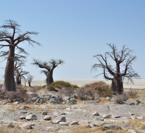 "Makgadikgadi<br><span class=""cc-link""><a href=""http://www.flickr.com/photos/abibhattachan/4954704963/"" target=""_blank"">Autor:abi.bhattachan</a><a href='http://creativecommons.org/licences/by/3.0'> <img class=""cc-icon"" src=""mods/_img/cc_by-small.png""></a></a></span>"