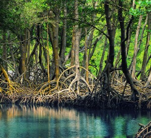 "Park Narodowy Los Haitises<br><span class=""cc-link""><a href=""http://commons.wikimedia.org/wiki/File:Dominican_republic_Los_Haitises_mangroves.jpeg"" target=""_blank"">Autor:Anton Bielousov</a><a href='http://creativecommons.org/licences/by-sa/3.0'> <img class=""cc-icon"" src=""mods/_img/cc_by_sa-small.png""></a></a></span>"