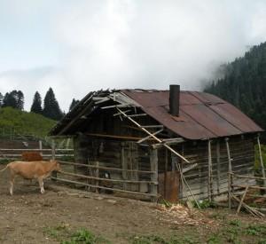 """Park Narodowy Borjomi- Kharagauli<br><span class=""""cc-link"""">Autor: Jan Ignacy Czempiński</span>"""