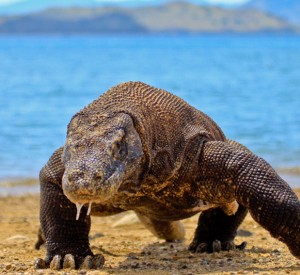 """Park Narodowy Komodo<br><span class=""""cc-link""""><a href=""""http://www.flickr.com/photos/rachdian/5418187901/"""" target=""""_blank"""">Autor:Adhi Rachdian</a><a href='http://creativecommons.org/licences/by/3.0'><img class=""""cc-icon"""" src=""""mods/_img/cc_by-small.png""""></a></a></span>"""