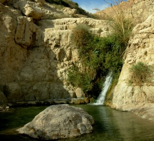 "Park Narodowy Ein Gedi<br><span class=""cc-link""><a href=""http://www.flickr.com/photos/banna123456/2239133705/"" target=""_blank"">Autor:Hannah Rosen</a><a href='http://creativecommons.org/licences/by/3.0'>&nbsp;<img class=""cc-icon"" src=""mods/_img/cc_by-small.png""></a></a></span>"