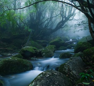 "Yakushima<br><span class=""cc-link""><a href=""http://www.flickr.com/photos/caseyyee/4278893510/"" target=""_blank"">Autor:Casey Yee</a><a href='http://creativecommons.org/licences/by-sa/3.0'> <img class=""cc-icon"" src=""mods/_img/cc_by_sa-small.png""></a></a></span>"
