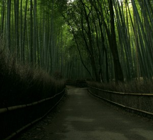 "Las bambusowy Sagano na przedmieściach Kyoto<br><span class=""cc-link""><a href=""http://www.flickr.com/photos/kusakabe/5289927163/"" target=""_blank"">Autor:Kusakabe</a><a href='http://creativecommons.org/licences/by-sa/3.0'> <img class=""cc-icon"" src=""mods/_img/cc_by_sa-small.png""></a></a></span>"