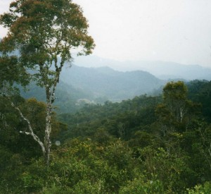 "Park Narodowy Ranomafana<br><span class=""cc-link"">Autor: Leonora Enking</span>"