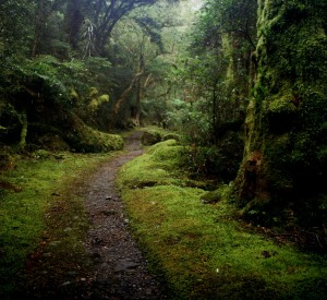 "Milford Track<br><span class=""cc-link""><a href=""http://www.flickr.com/photos/anoldent/2887680506/"" target=""_blank"">Autor:anoldent</a><a href='http://creativecommons.org/licences/by-sa/3.0'>&nbsp;<img class=""cc-icon"" src=""mods/_img/cc_by_sa-small.png""></a></a></span>"