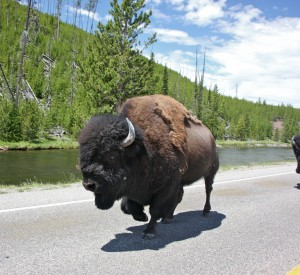 "Park Narodowy Yellowstone<br><span class=""cc-link""><a href=""http://www.flickr.com/photos/jurvetson/4750491673/"" target=""_blank"">Autor:Steve Jurvetson</a><a href='http://creativecommons.org/licences/by/3.0'> <img class=""cc-icon"" src=""mods/_img/cc_by-small.png""></a></a></span>"