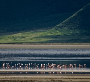"Park Narodowy Ngorongoro<br><span class=""cc-link""><a href=""http://www.flickr.com/photos/wwarby/2405442606/"" target=""_blank"">Autor:William Warby</a><a href='http://creativecommons.org/licences/by/3.0'>&nbsp;<img class=""cc-icon"" src=""mods/_img/cc_by-small.png""></a></a></span>"